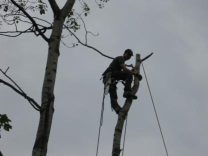 Martineau Abattage d'Arbres - Tree Service