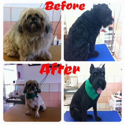 Kiki's Dog Grooming - Pet Grooming, Clipping & Washing - 613-761-2419