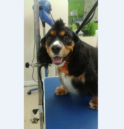 Salon Toilettage Poil Doux - Pet Grooming, Clipping & Washing - 418-571-3063