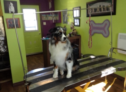 Gone to the Dogs Professional Pet Grooming - Toilettage et tonte d'animaux domestiques - 709-257-2432