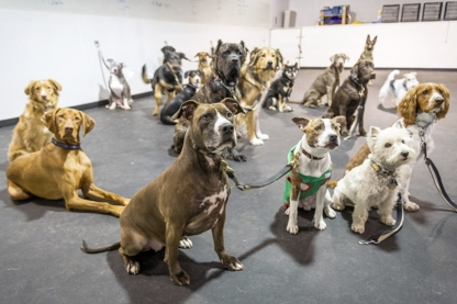 Clever Canines Ltd - Dog Training & Pet Obedience Schools
