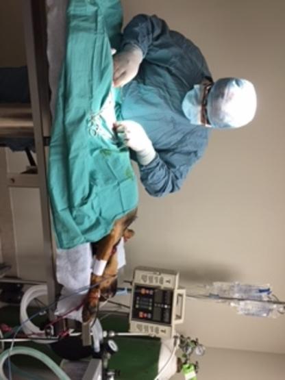 Carlton Animal Hospital - Veterinarians - 289-362-3900