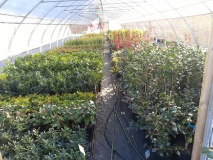 Green Mountain Nursery Ltd - Nurseries & Tree Growers