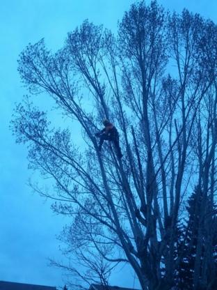 Hooch Tree Removal - Tree Service - 403-617-7428