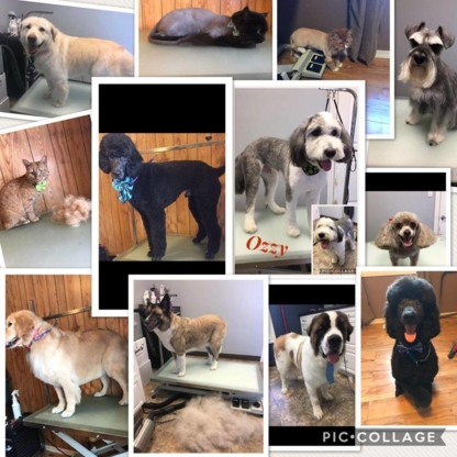 Paws N Play Grooming And Boutique - Pet Grooming, Clipping & Washing - 306-691-0001