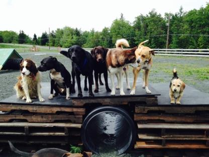 Bowlin Farms Doggie Adventures - Pet Sitting Service - 902-718-9293