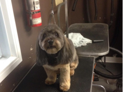 The Groom Room - Pet Grooming, Clipping & Washing - 604-785-3517