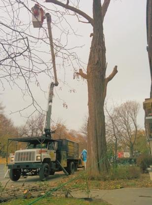 Service d'arbres 4 Saisons - Entrepreneurs généraux
