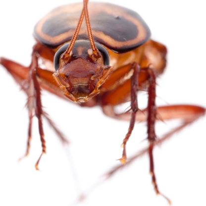 Extermination Insecta Inc - Pest Control Services - 438-498-4353