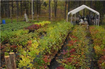 Le Monde Des Arbres - Service d'entretien d'arbres - 819-679-3744