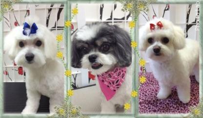 Danielle's Dog Grooming Studio - Toilettage et tonte d'animaux domestiques - 604-996-1213