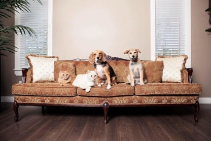 Pet Spa & Portraits - Pet Grooming, Clipping & Washing
