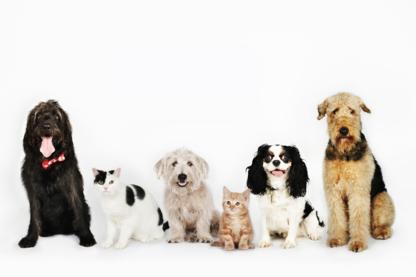 Bishop Gate Animal Hospital - Veterinarians