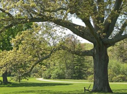 NB Tree Service Ltd - 403-208-2502