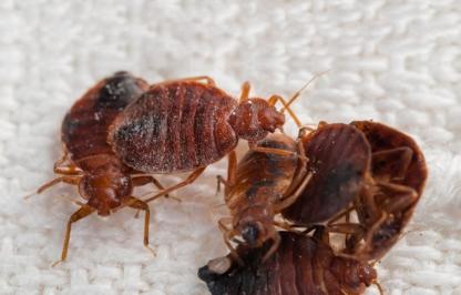 Assaut Extermination - Pest Control Services - 450-347-9997