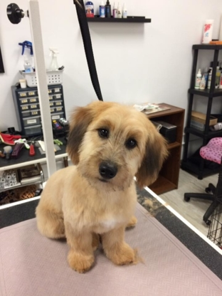 Kathy's Mutt Cuts - Pet Grooming, Clipping & Washing - 778-432-4301