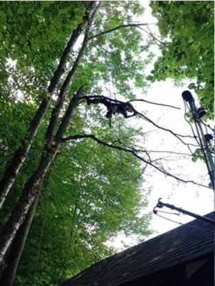 Beaux Bouleaux - Tree Service - 438-494-4238