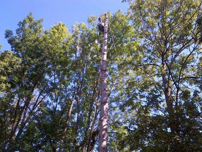Towne Trees Inc - Tree Service