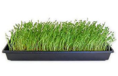 Güd Greens - Natural & Organic Food Stores
