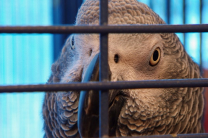 Night Owl Bird Hospital - Veterinarians - 604-734-5100