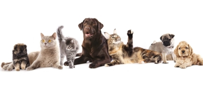 South Whitby Veterinary Services - Veterinarians