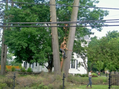 Emondage Désautels - Tree Service - 819-847-3803