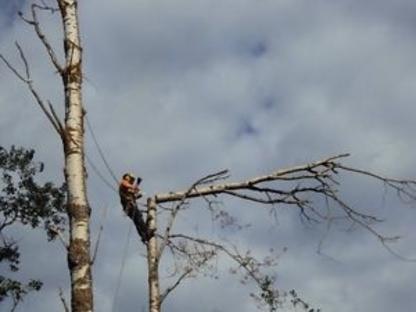 Alberta's Finest Tree Service - Conseillers en arbres