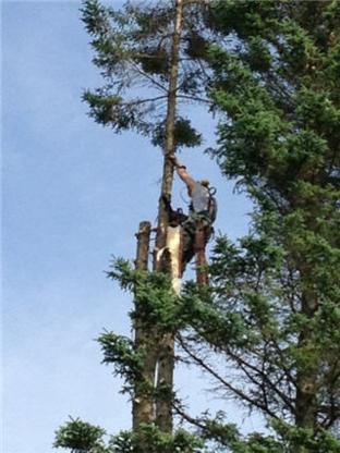 Benoit Emondage des Laurentides - Tree Service