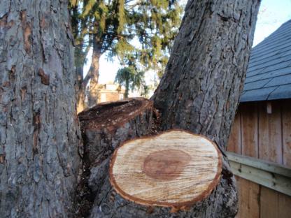 Apes Tree Service - 519-317-6493