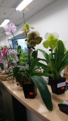 Greystone Walk Garden Centre - Florists' Supplies - 416-267-5886