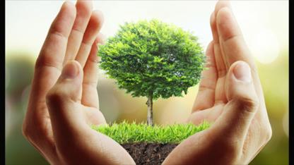 Albert Tree Services - Tree Service - 709-769-5444