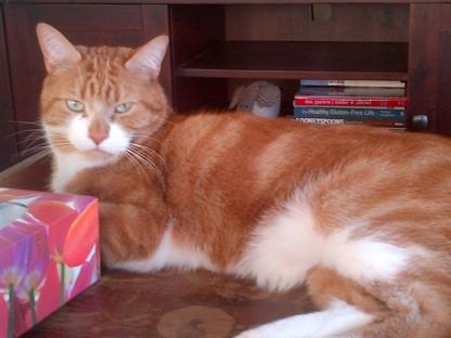 Pawsitive Pet Sitting Services - Service de surveillance de maison - 587-437-3777
