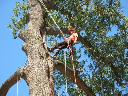 Calgary Tree Services Ltd - Tree Service - 403-605-1422
