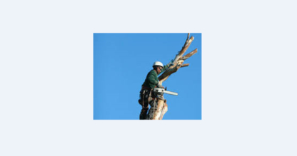 Saskatoon Tree Service - Tree Service - 306-280-5522
