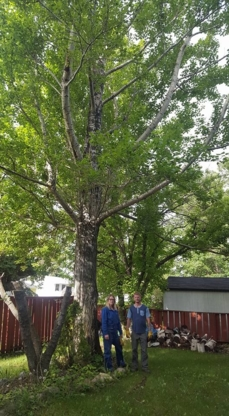 Borderline Services Ltd - Tree Service - 780-205-0913