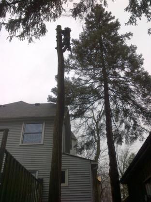 Even Cut Ltd - Tree Service
