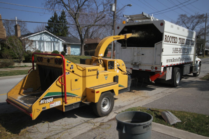 Rooted Tree Services - Tree Service