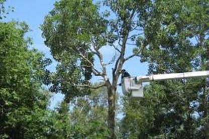 Entreprises Forestières et émondage Filion Inc - Service d'entretien d'arbres
