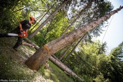 Service d'Arbres Jesse Brisson - Service d'entretien d'arbres - 514-833-0451