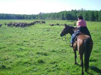 Penner Horseback Adventures Ltd - Horseback Rides