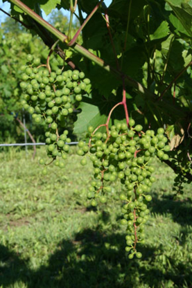 Voir le profil de Smokie Ridge Vineyard - Nepean
