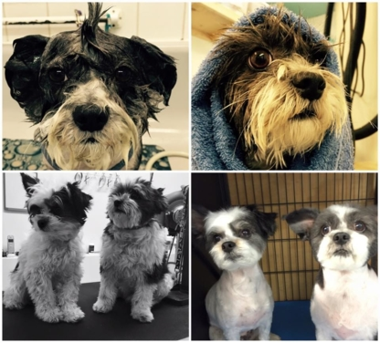 Clippers N Suds - Pet Grooming, Clipping & Washing