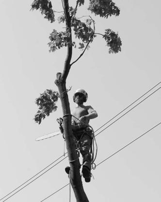 View Goodwood Tree Company's Cooksville profile