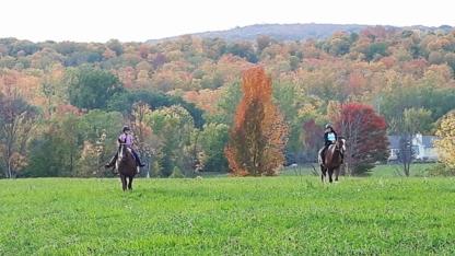 Heartfelt Equestrian - Commerçants de chevaux