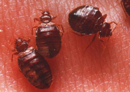 Advantage Pest Control - Wildlife & Animal Control - 905-420-9019
