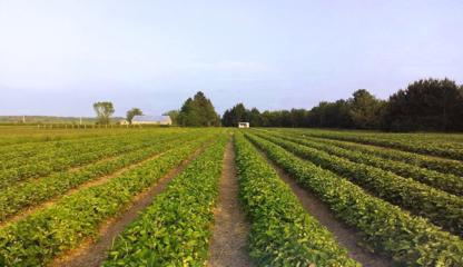 Ferme Paquette-Dessureaux - Producteurs et distributeurs de fruits et légumes - 418-362-2829