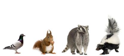 Cody's Wildlife Control - Extermination et fumigation