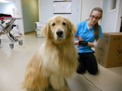 Veterinarians in Sheet Harbour NS | YellowPages ca™