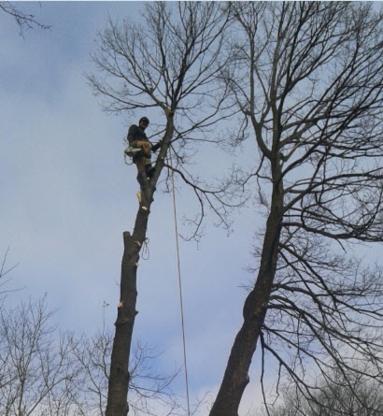GoodFellers Tree & Stump - Tree Service - 204-995-1778