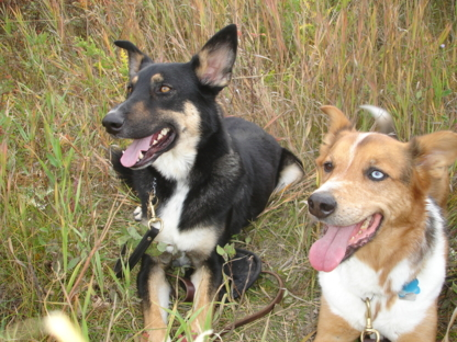 Happy Tails Dog Training - Dog Training & Pet Obedience Schools